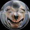 Seals / Тюлени