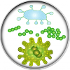 Bacteria (transparent)