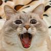 Jazz the cat 1 / Кот Джаз 1