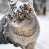 Еще немножко кошек / A few more cats