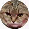 Коты / Cats