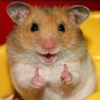 Хомяки / Hamsters