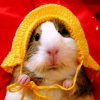 Хомяки 2 / Hamsters 2