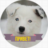 Собаки / Dogs