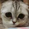 Грустные коты / Sad cats