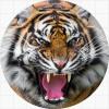 Тигры / Tigers